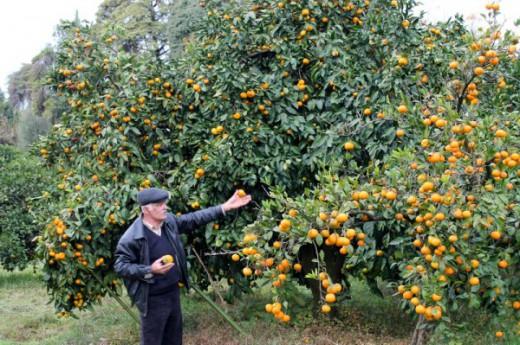 Фермерство. Что выращивать в Абхазии