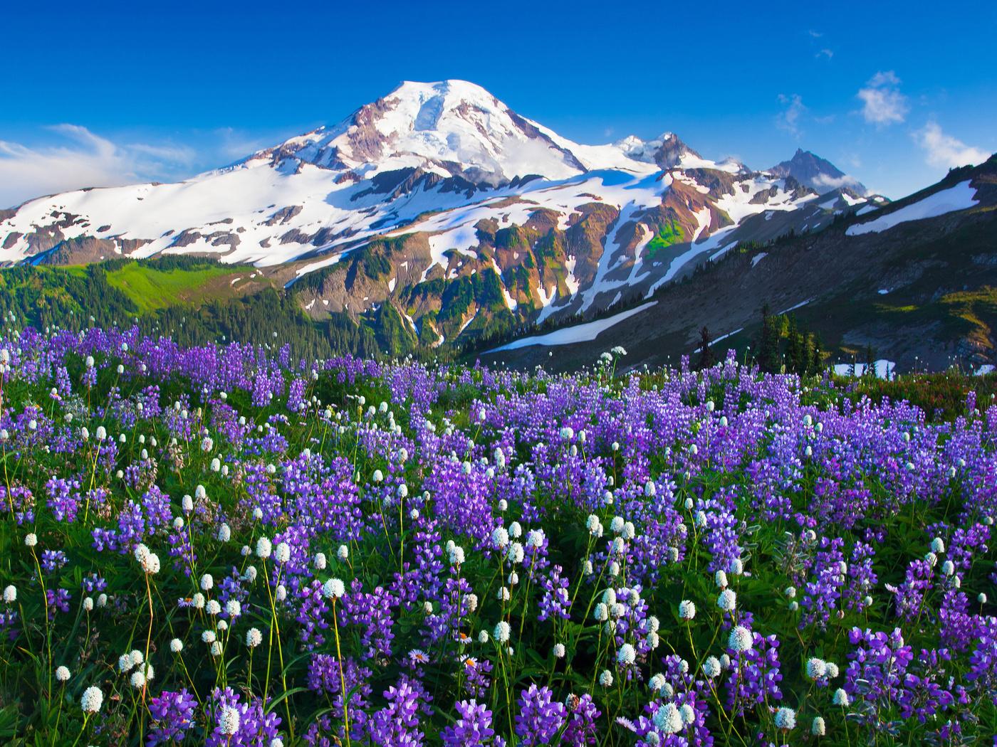 Цветы в горах 2