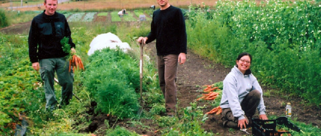 Волонтеры на фермах
