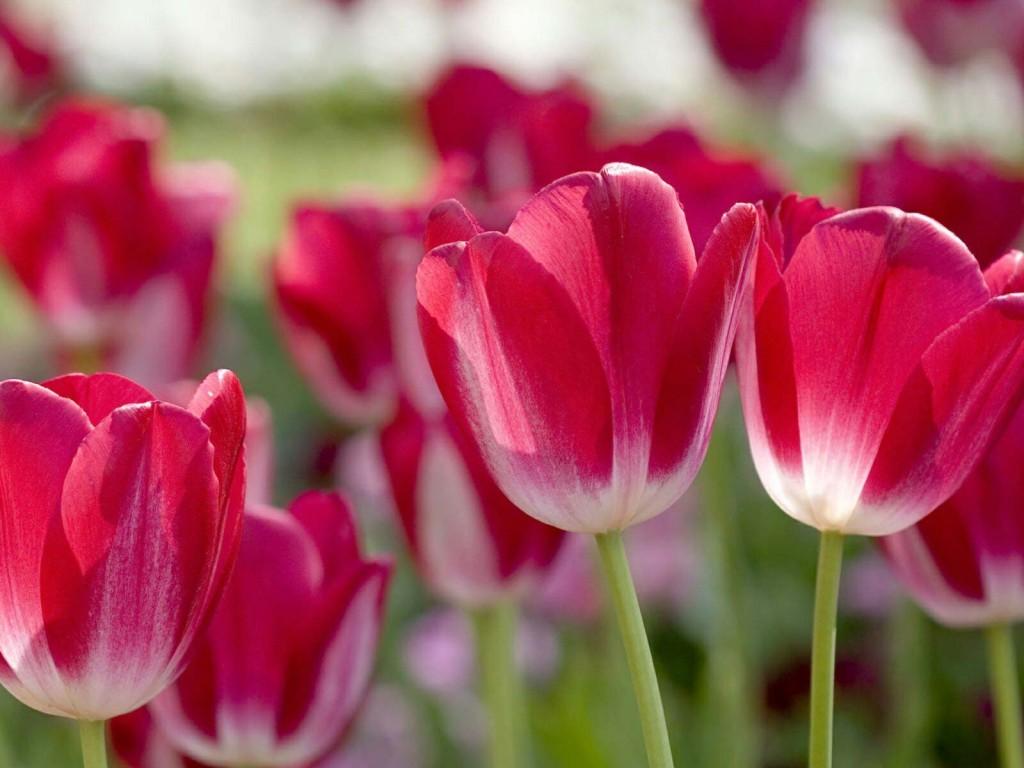 cvety1906
