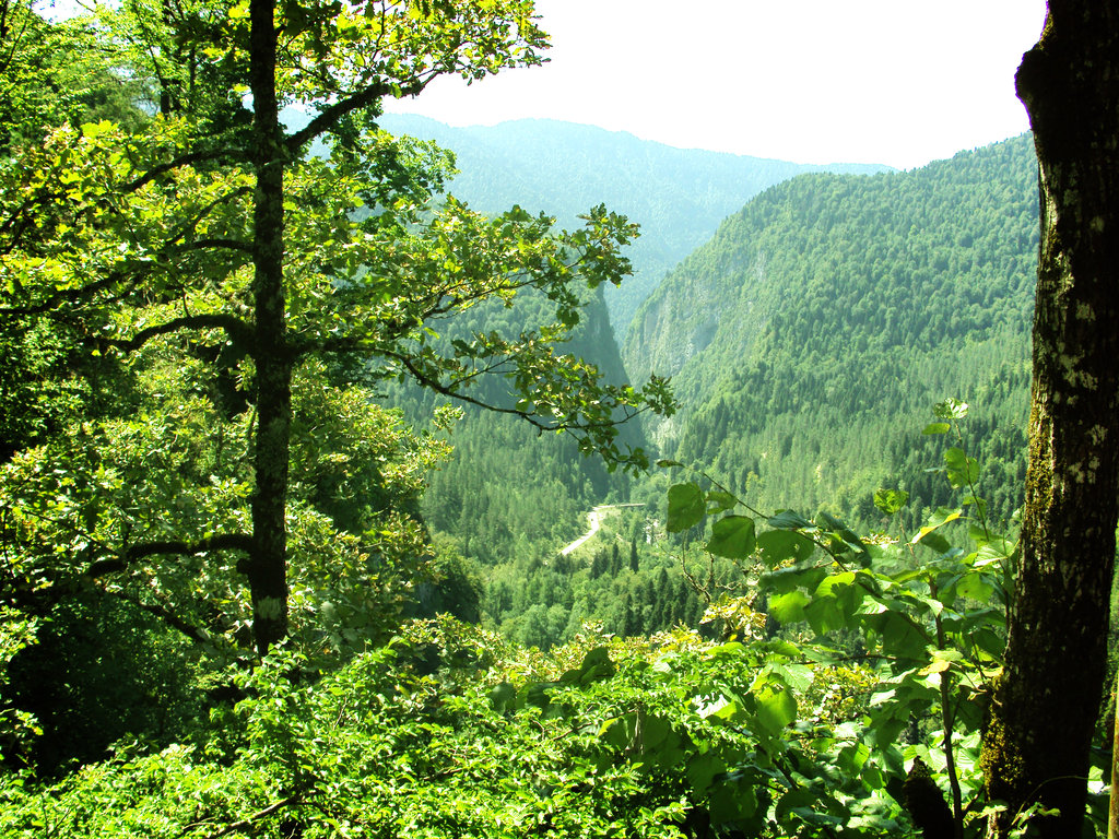 forests-of-abkhazia