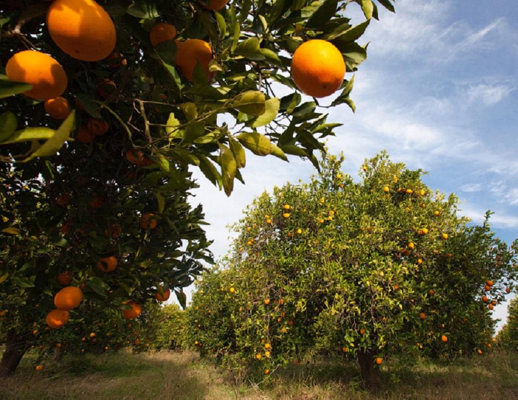 Узнать про фермерство в Абхазии || Орех растущий в абхазии