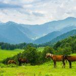 земельный налог в абхазии